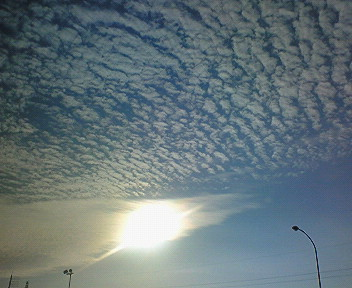 うろこ雲?いわし雲?