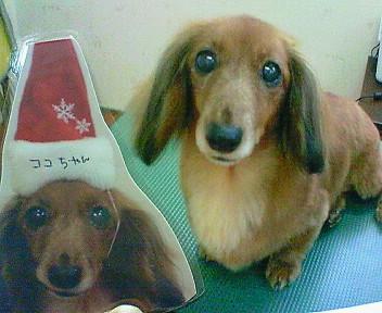 ココ&わん太